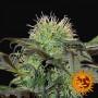 Bad Azz Kush feminized насіння конопель: фото, характеристики, відгуки, опис