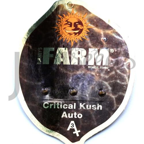Auto Critical Kush Feminised насіння конопель: фото, характеристики, відгуки, опис