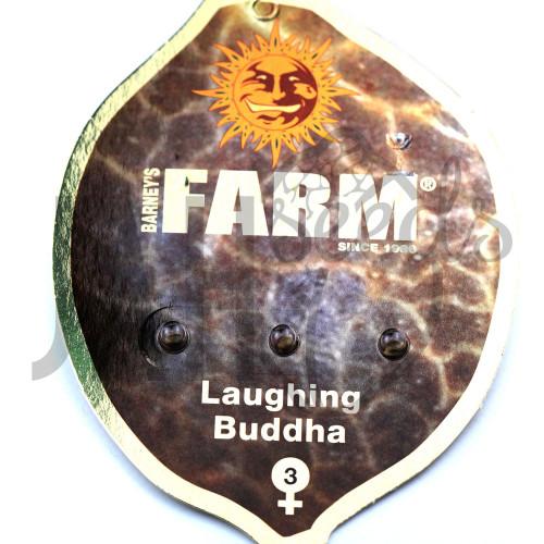 Laughing Buddha Feminised насіння конопель: фото, характеристики, відгуки, опис