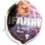 Crimea Blue Feminised насіння конопель: фото, характеристики, відгуки, опис