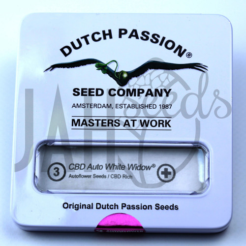 CBD Auto White Widow feminised насіння конопель: фото, характеристики, відгуки, опис