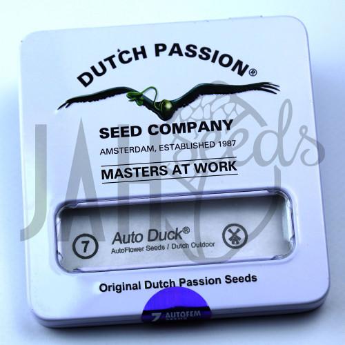 Auto Duck feminised насіння конопель: фото, характеристики, відгуки, опис