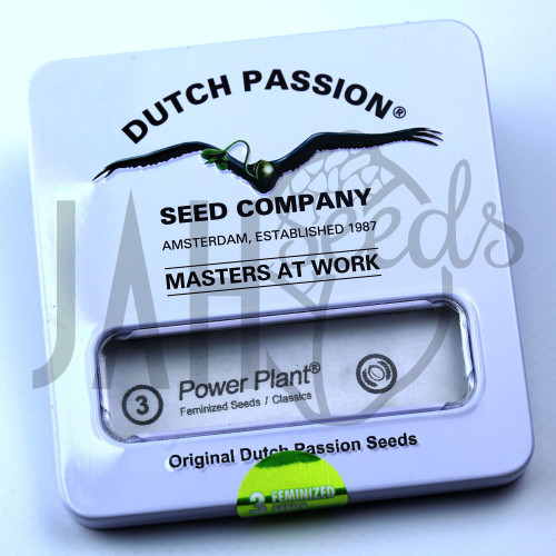 Power Plant feminised насіння конопель: фото, характеристики, відгуки, опис