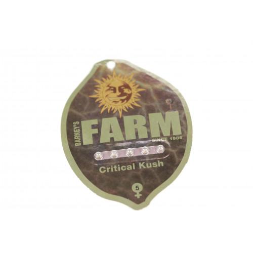Critical Rapido Feminised насіння конопель: фото, характеристики, відгуки, опис