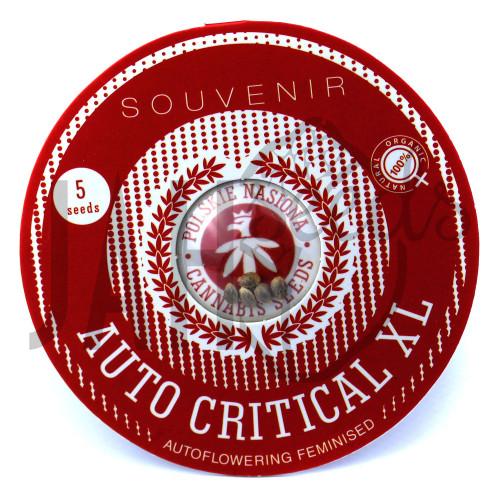 AUTO CRITICAL XL FEMINISED насіння конопель: фото, характеристики, відгуки, опис