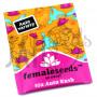 Auto Kush Feminised насіння конопель: фото, характеристики, відгуки, опис