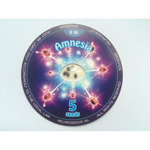 Amnesia - Feminised Neuro Seeds насіння конопель: фото, характеристики, відгуки, опис