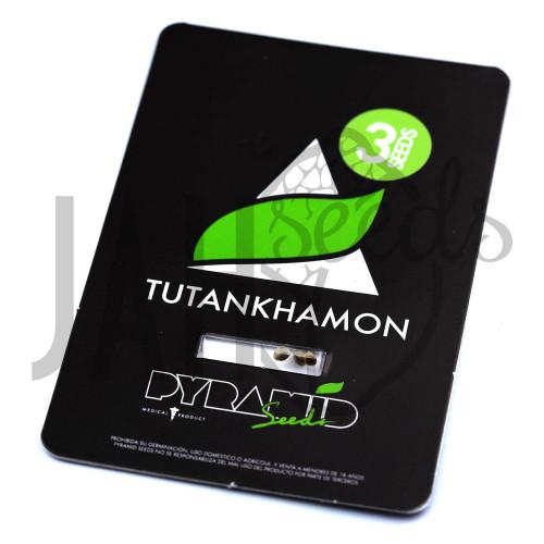Tutankhamon Feminised насіння конопель: фото, характеристики, відгуки, опис