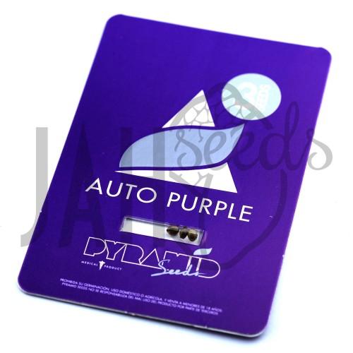 Auto Purple Feminised насіння конопель: фото, характеристики, відгуки, опис
