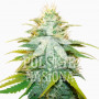 Auto Green-O-Matic Feminised насіння конопель: фото, характеристики, відгуки, опис